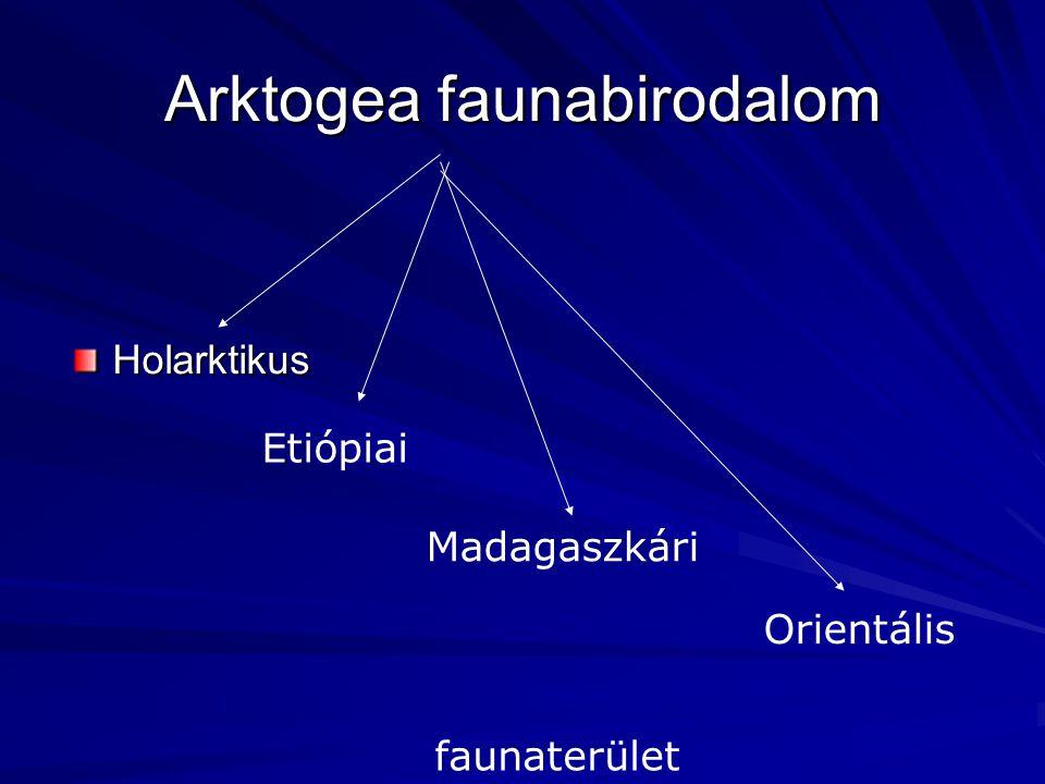 Arktogea faunabirodalom Holarktikus Etiópiai Madagaszkári Orientális faunaterület