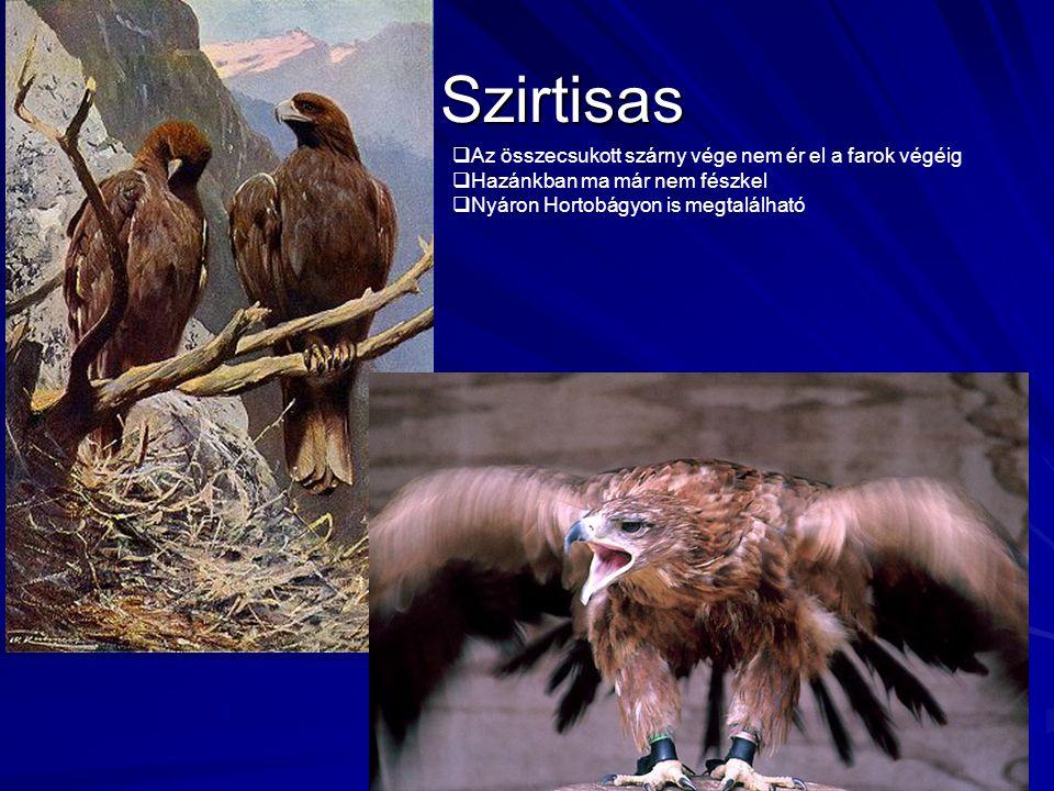Szirtisas Szirtisas  Az összecsukott szárny vége nem ér el a farok végéig  Hazánkban ma már nem fészkel  Nyáron Hortobágyon is megtalálható