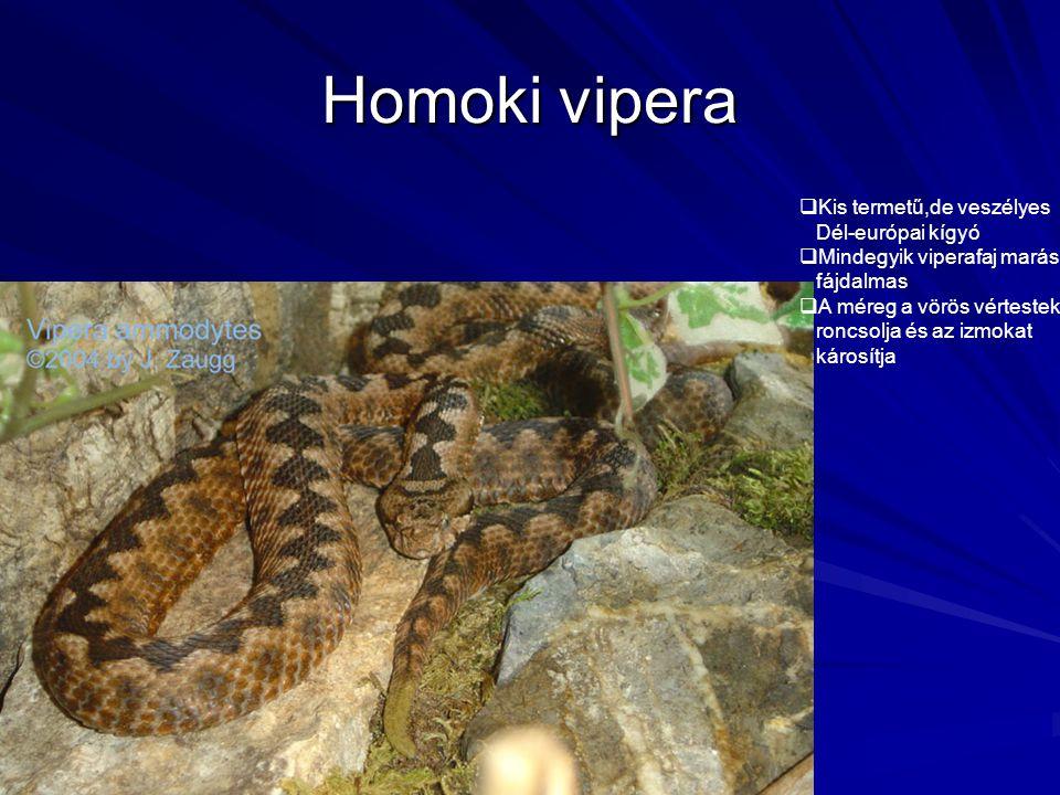 Homoki vipera  Kis termetű,de veszélyes Dél-európai kígyó  Mindegyik viperafaj marása fájdalmas  A méreg a vörös vértesteket roncsolja és az izmoka