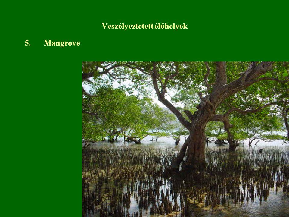 5.Mangrove Veszélyeztetett élőhelyek