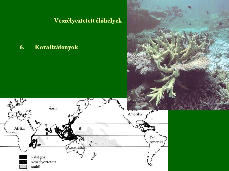 6.Korallzátonyok Veszélyeztetett élőhelyek