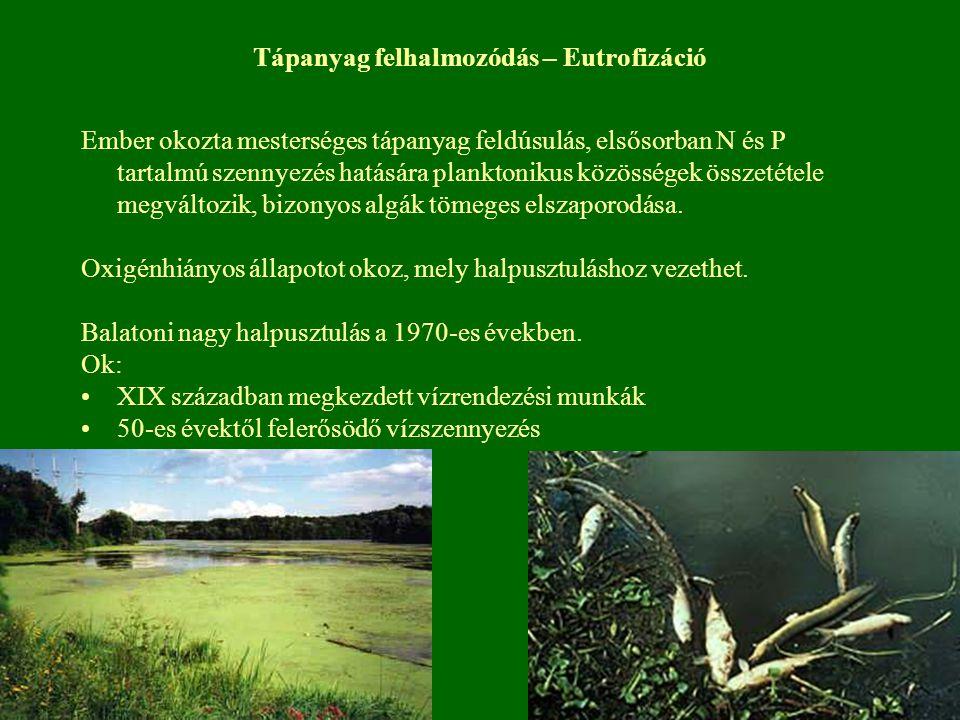Tápanyag felhalmozódás – Eutrofizáció Ember okozta mesterséges tápanyag feldúsulás, elsősorban N és P tartalmú szennyezés hatására planktonikus közöss