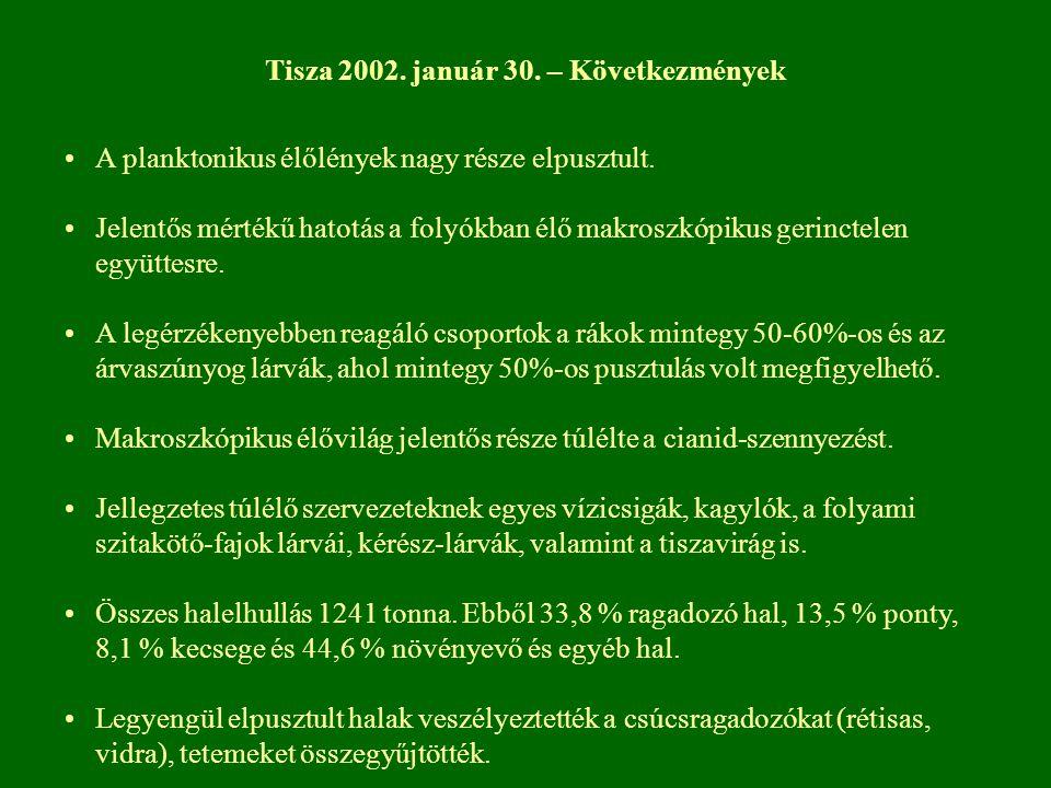 Tisza 2002. január 30. – Következmények A planktonikus élőlények nagy része elpusztult. Jelentős mértékű hatotás a folyókban élő makroszkópikus gerinc