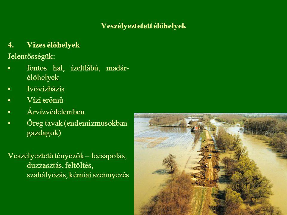 4.Vizes élőhelyek Jelentősségük: fontos hal, ízeltlábú, madár- élőhelyek Ivóvízbázis Vízi erőmű Árvízvédelemben Öreg tavak (endemizmusokban gazdagok)