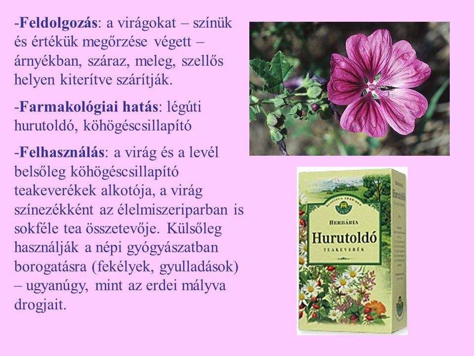 -Feldolgozás: a virágokat – színük és értékük megőrzése végett – árnyékban, száraz, meleg, szellős helyen kiterítve szárítják. -Farmakológiai hatás: l
