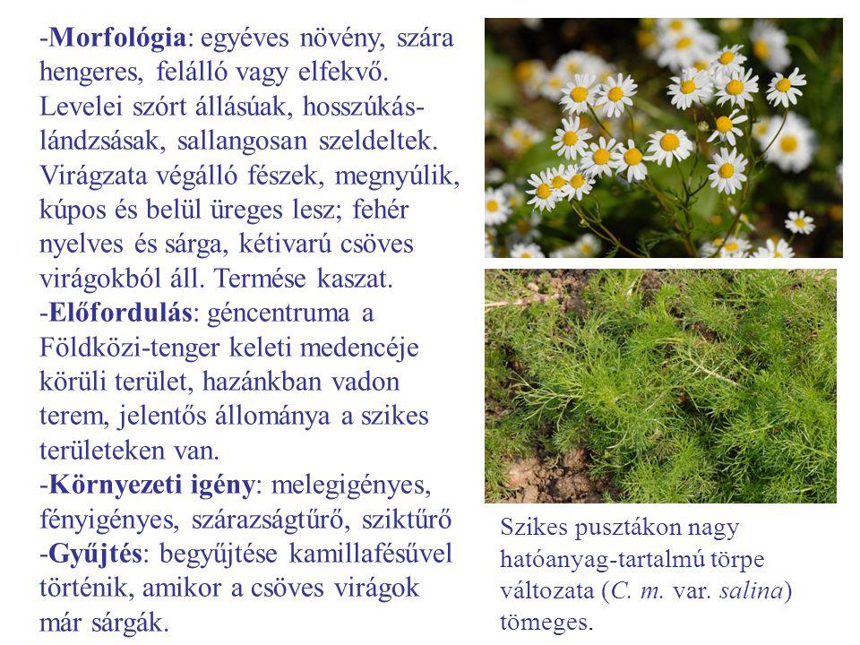 -Morfológia: egyéves növény, szára hengeres, felálló vagy elfekvő. Levelei szórt állásúak, hosszúkás- lándzsásak, sallangosan szeldeltek. Virágzata vé