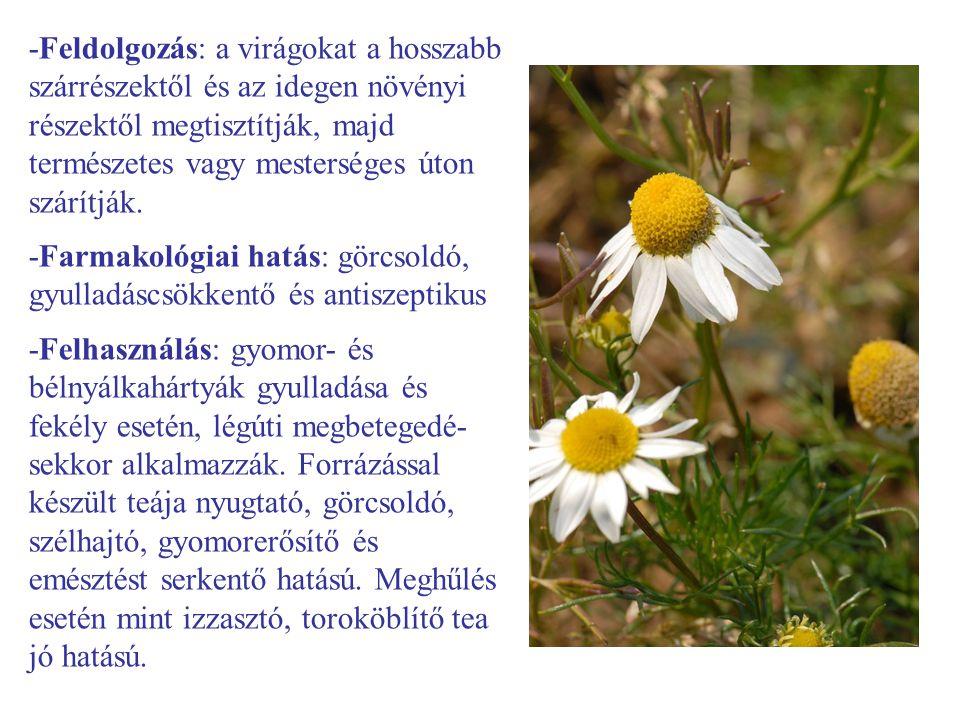 -Feldolgozás: a virágokat a hosszabb szárrészektől és az idegen növényi részektől megtisztítják, majd természetes vagy mesterséges úton szárítják. -Fa
