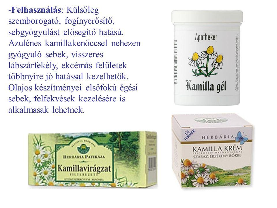 -Felhasználás: Külsőleg szemborogató, fogínyerősítő, sebgyógyulást elősegítő hatású. Azulénes kamillakenőccsel nehezen gyógyuló sebek, visszeres lábsz
