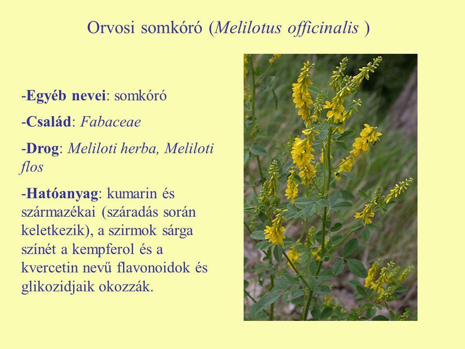 Orvosi somkóró (Melilotus officinalis ) -Egyéb nevei: somkóró -Család: Fabaceae -Drog: Meliloti herba, Meliloti flos -Hatóanyag: kumarin és származéka