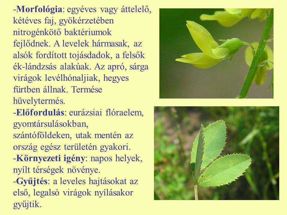 -Morfológia: egyéves vagy áttelelő, kétéves faj, gyökérzetében nitrogénkötő baktériumok fejlődnek. A levelek hármasak, az alsók fordított tojásdadok,