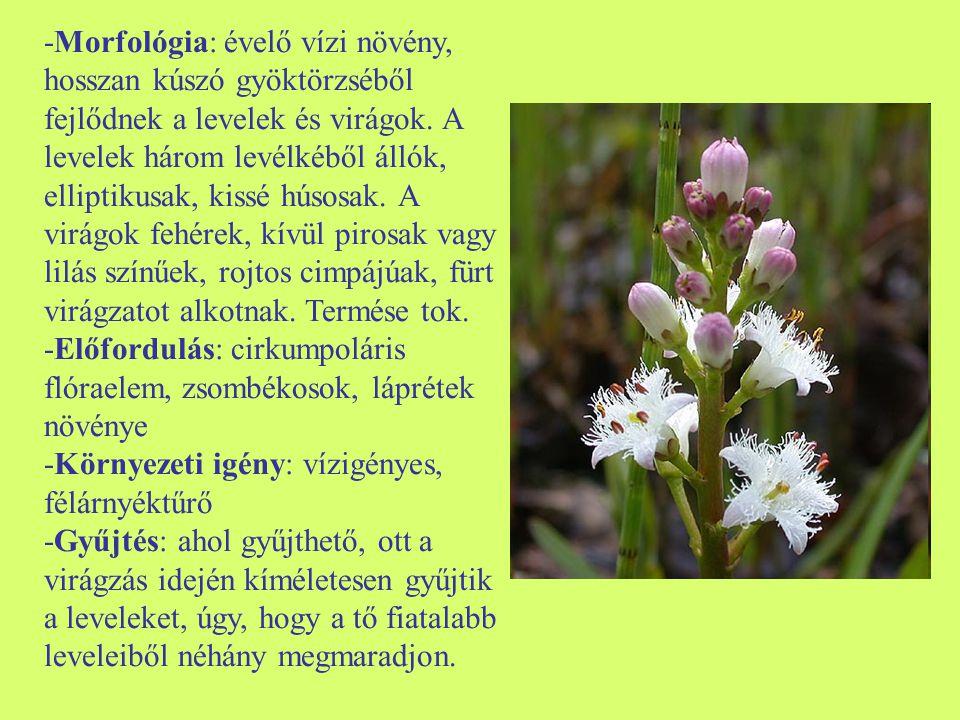-Morfológia: évelő vízi növény, hosszan kúszó gyöktörzséből fejlődnek a levelek és virágok. A levelek három levélkéből állók, elliptikusak, kissé húso