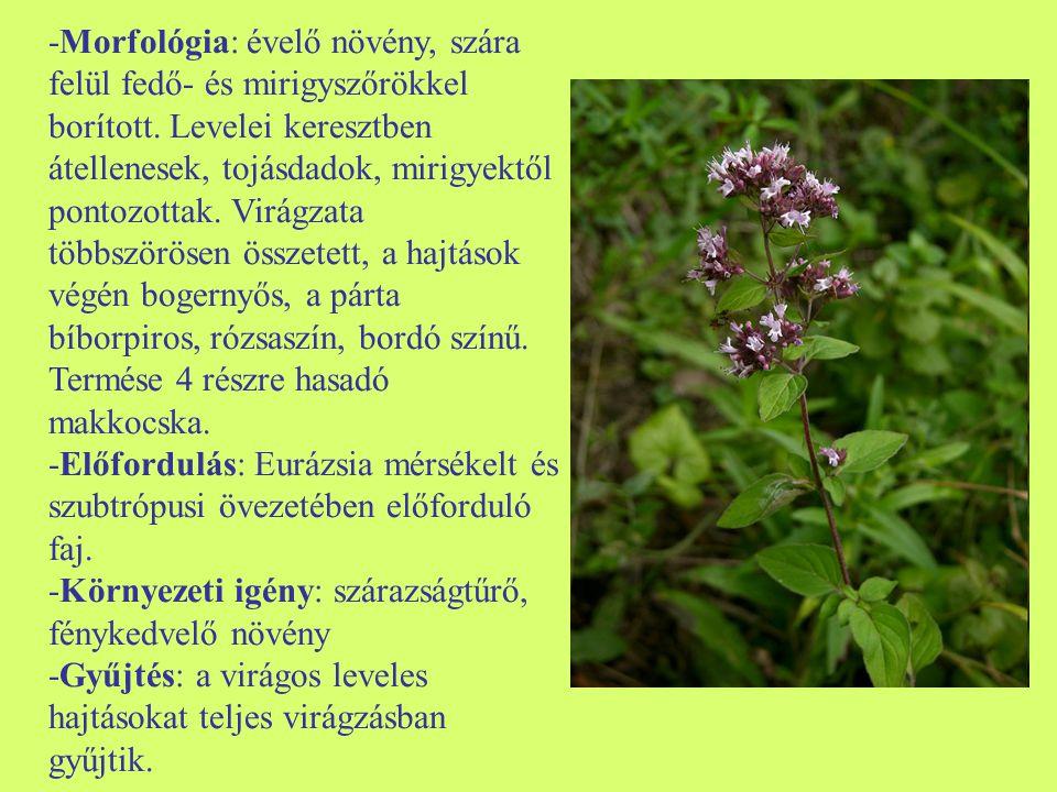 -Morfológia: évelő növény, szára felül fedő- és mirigyszőrökkel borított. Levelei keresztben átellenesek, tojásdadok, mirigyektől pontozottak. Virágza