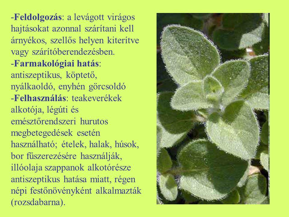 -Feldolgozás: a levágott virágos hajtásokat azonnal szárítani kell árnyékos, szellős helyen kiterítve vagy szárítóberendezésben. -Farmakológiai hatás: