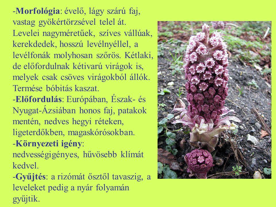 -Morfológia: évelő, lágy szárú faj, vastag gyökértörzsével telel át. Levelei nagyméretűek, szíves vállúak, kerekdedek, hosszú levélnyéllel, a levélfon
