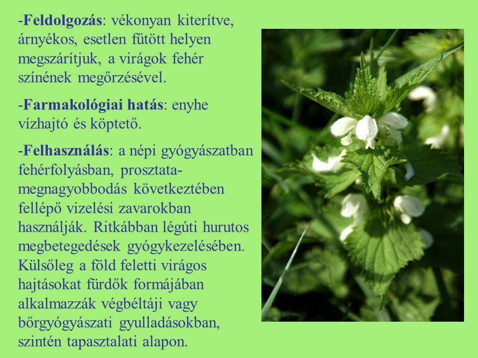 -Feldolgozás: vékonyan kiterítve, árnyékos, esetlen fűtött helyen megszárítjuk, a virágok fehér színének megőrzésével. -Farmakológiai hatás: enyhe víz