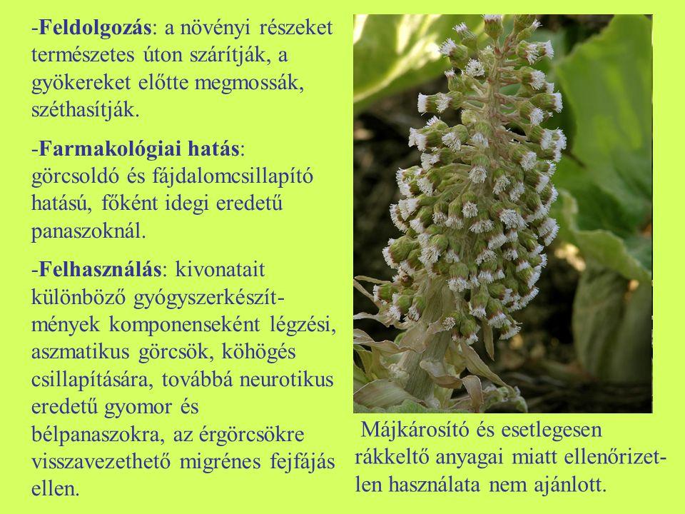 -Feldolgozás: a növényi részeket természetes úton szárítják, a gyökereket előtte megmossák, széthasítják. -Farmakológiai hatás: görcsoldó és fájdalomc
