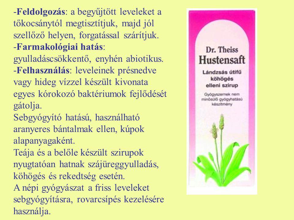 -Feldolgozás: a begyűjtött leveleket a tőkocsánytól megtisztítjuk, majd jól szellőző helyen, forgatással szárítjuk. -Farmakológiai hatás: gyulladáscsö