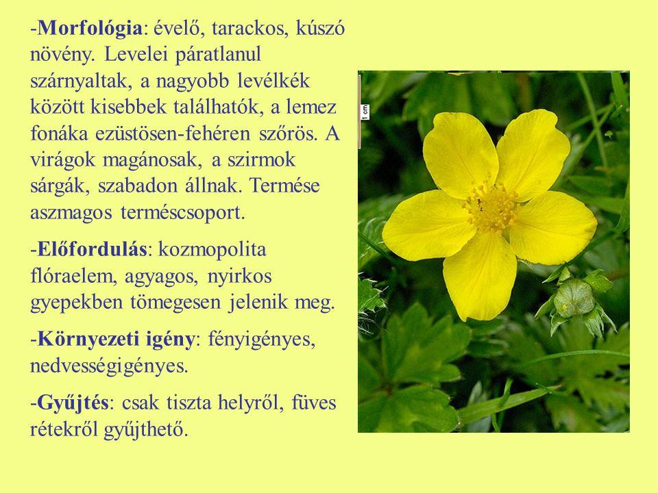 -Morfológia: évelő, tarackos, kúszó növény. Levelei páratlanul szárnyaltak, a nagyobb levélkék között kisebbek találhatók, a lemez fonáka ezüstösen-fe