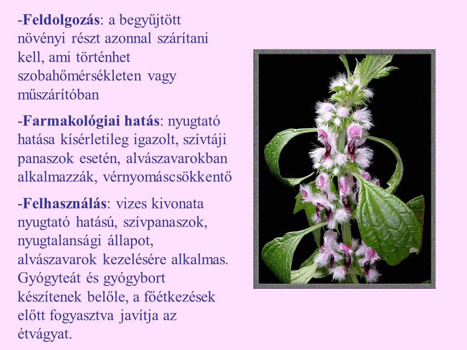 -Feldolgozás: a begyűjtött növényi részt azonnal szárítani kell, ami történhet szobahőmérsékleten vagy műszárítóban -Farmakológiai hatás: nyugtató hat
