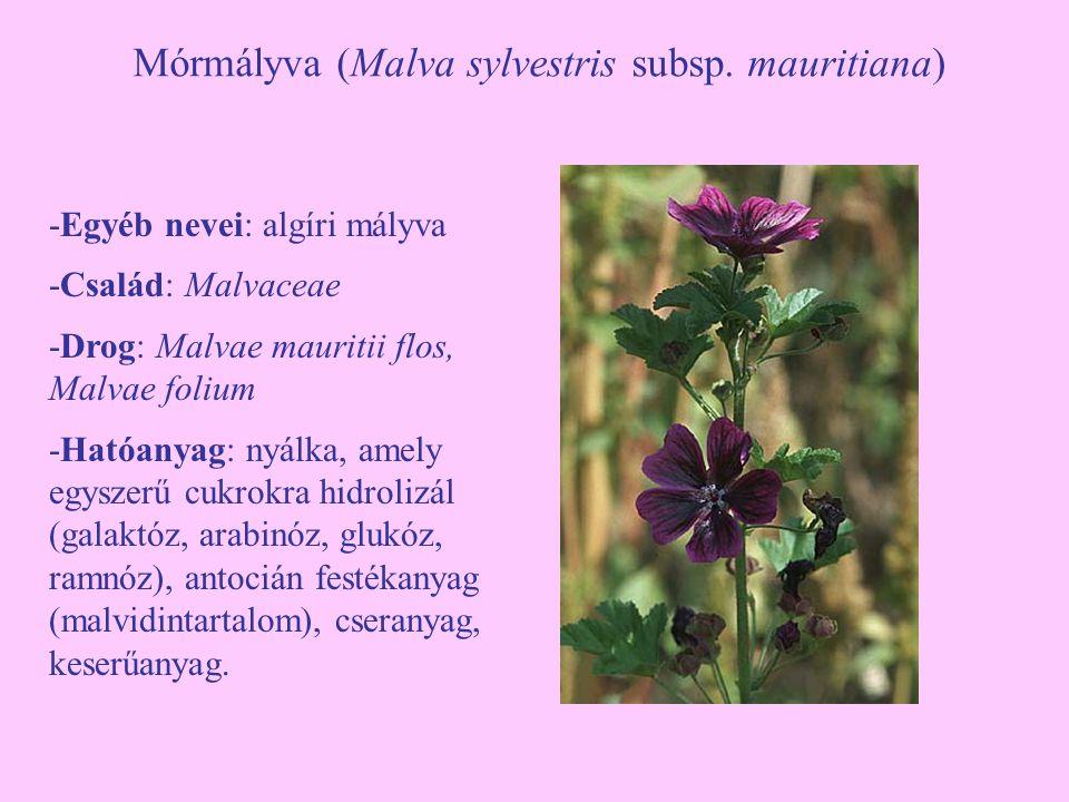 Mórmályva (Malva sylvestris subsp. mauritiana) -Egyéb nevei: algíri mályva -Család: Malvaceae -Drog: Malvae mauritii flos, Malvae folium -Hatóanyag: n