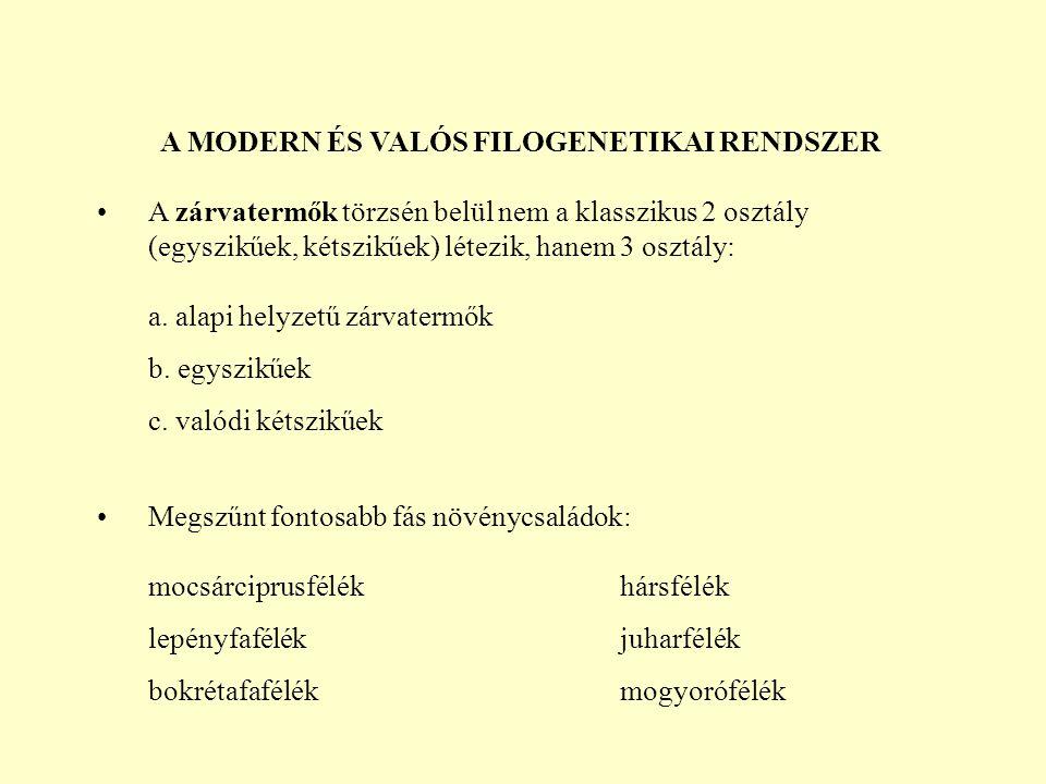A MODERN ÉS VALÓS FILOGENETIKAI RENDSZER A zárvatermők törzsén belül nem a klasszikus 2 osztály (egyszikűek, kétszikűek) létezik, hanem 3 osztály: a.