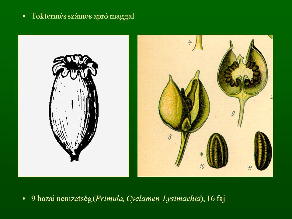 Toktermés számos apró maggal 9 hazai nemzetség (Primula, Cyclamen, Lysimachia), 16 faj