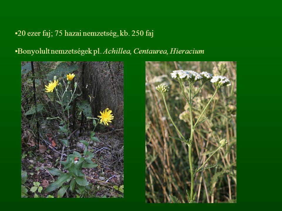 20 ezer faj; 75 hazai nemzetség, kb. 250 faj Bonyolult nemzetségek pl. Achillea, Centaurea, Hieracium