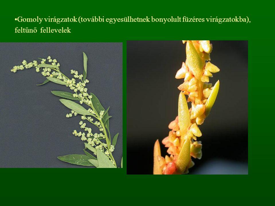 Gomoly virágzatok (további egyesülhetnek bonyolult füzéres virágzatokba), feltűnő fellevelek