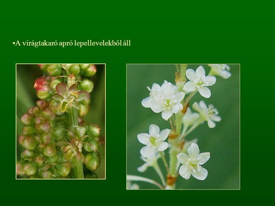 A virágtakaró apró lepellevelekből áll