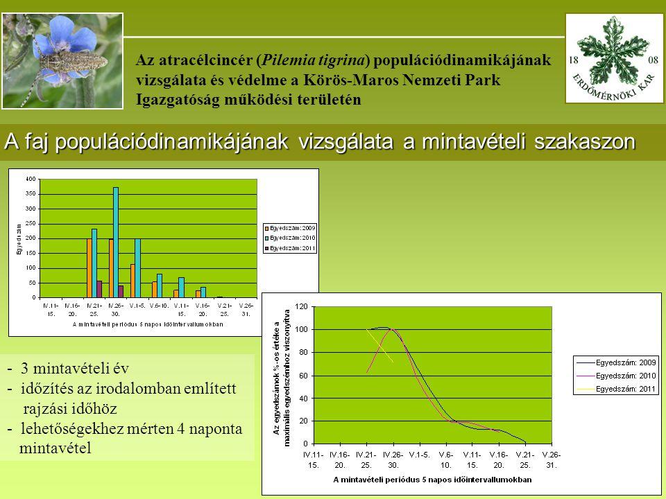 _______________________________________ Az atracélcincér (Pilemia tigrina) populációdinamikájának vizsgálata és védelme a Körös-Maros Nemzeti Park Igazgatóság működési területén A faj populációdinamikájának vizsgálata a mintavételi szakaszon - 3 mintavételi év - időzítés az irodalomban említett rajzási időhöz - lehetőségekhez mérten 4 naponta mintavétel