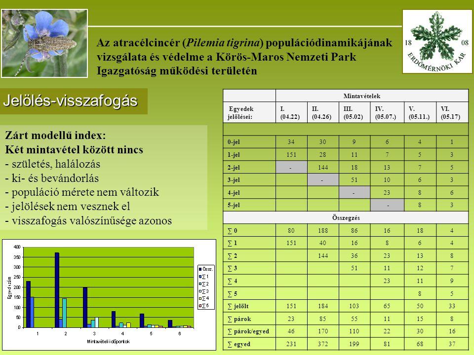 _______________________________________ Az atracélcincér (Pilemia tigrina) populációdinamikájának vizsgálata és védelme a Körös-Maros Nemzeti Park Igazgatóság működési területén Jelölés-visszafogás Mintavételek Egyedek jelölései: I.