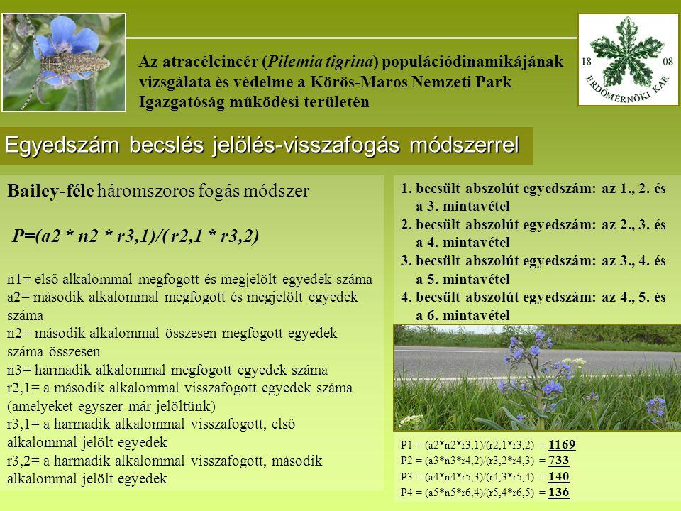_______________________________________ Az atracélcincér (Pilemia tigrina) populációdinamikájának vizsgálata és védelme a Körös-Maros Nemzeti Park Igazgatóság működési területén Egyedszám becslés jelölés-visszafogás módszerrel Bailey-féle háromszoros fogás módszer P=(a2 * n2 * r3,1)/( r2,1 * r3,2) n1= első alkalommal megfogott és megjelölt egyedek száma a2= második alkalommal megfogott és megjelölt egyedek száma n2= második alkalommal összesen megfogott egyedek száma összesen n3= harmadik alkalommal megfogott egyedek száma r2,1= a második alkalommal visszafogott egyedek száma (amelyeket egyszer már jelöltünk) r3,1= a harmadik alkalommal visszafogott, első alkalommal jelölt egyedek r3,2= a harmadik alkalommal visszafogott, második alkalommal jelölt egyedek 1.