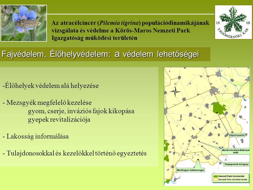 _______________________________________ Az atracélcincér (Pilemia tigrina) populációdinamikájának vizsgálata és védelme a Körös-Maros Nemzeti Park Igazgatóság működési területén Fajvédelem, Élőhelyvédelem: a védelem lehetőségei -Élőhelyek védelem alá helyezése - Mezsgyék megfelelő kezelése gyom, cserje, inváziós fajok kikopása gyepek revitalizációja - Lakosság informálása - Tulajdonosokkal és kezelőkkel történő egyeztetés
