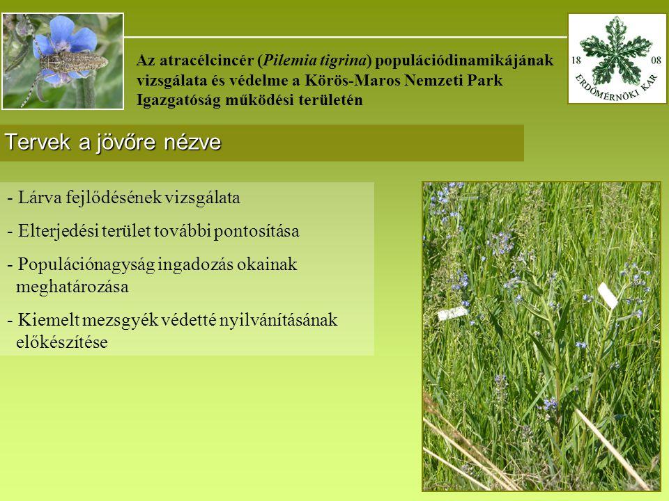 _______________________________________ Az atracélcincér (Pilemia tigrina) populációdinamikájának vizsgálata és védelme a Körös-Maros Nemzeti Park Igazgatóság működési területén Tervek a jövőre nézve - Lárva fejlődésének vizsgálata - Elterjedési terület további pontosítása - Populációnagyság ingadozás okainak meghatározása - Kiemelt mezsgyék védetté nyilvánításának előkészítése