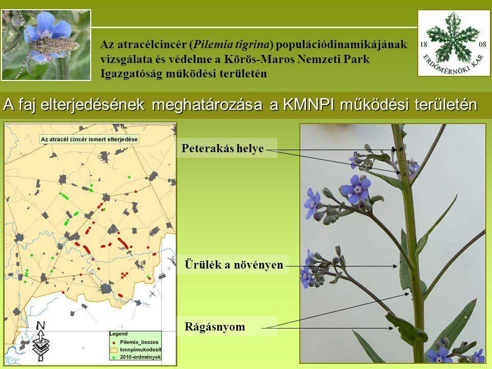 _______________________________________ Az atracélcincér (Pilemia tigrina) populációdinamikájának vizsgálata és védelme a Körös-Maros Nemzeti Park Igazgatóság működési területén A faj elterjedésének meghatározása a KMNPI működési területén 1 Peterakás helye Ürülék a növényen Rágásnyom
