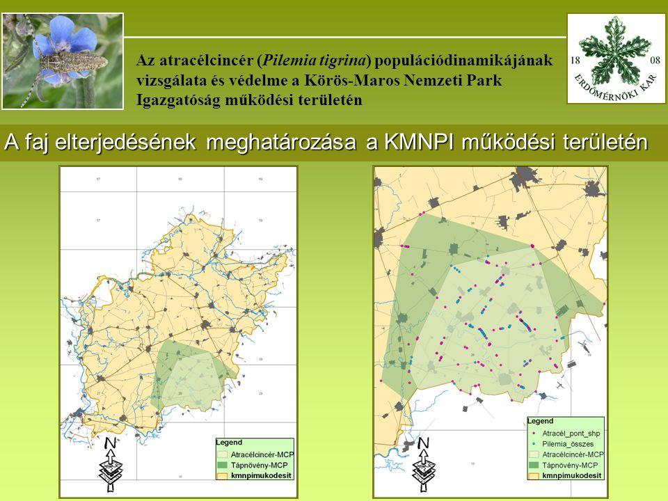 _______________________________________ Az atracélcincér (Pilemia tigrina) populációdinamikájának vizsgálata és védelme a Körös-Maros Nemzeti Park Igazgatóság működési területén A faj mozgási mintázatának vizsgálata Jelölés ideje2009.
