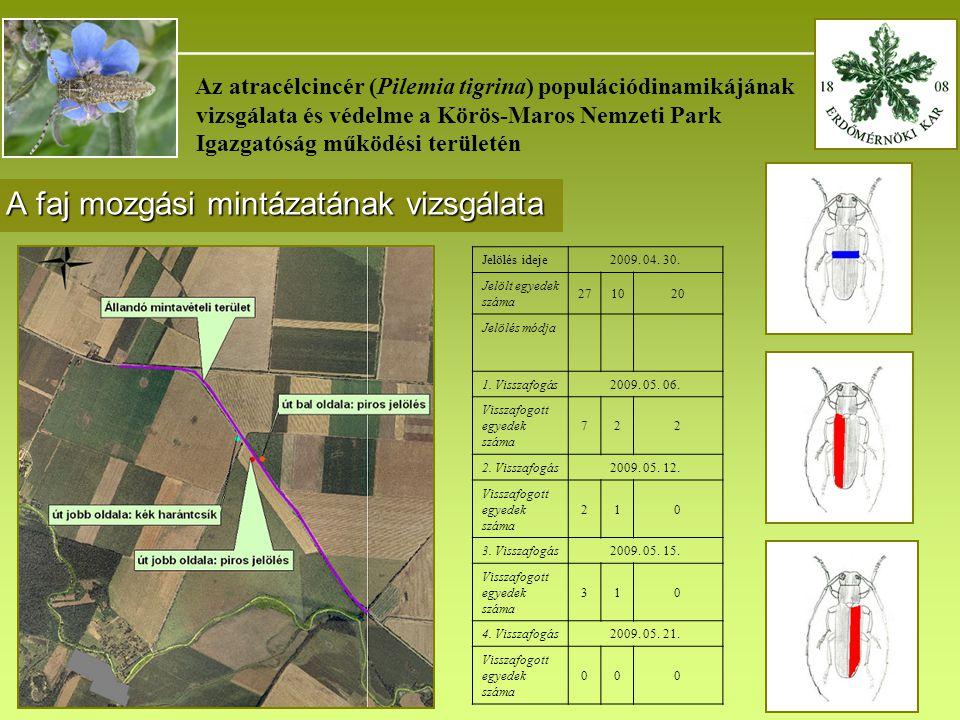 _______________________________________ Az atracélcincér (Pilemia tigrina) populációdinamikájának vizsgálata és védelme a Körös-Maros Nemzeti Park Igazgatóság működési területén A faj mozgási mintázatának vizsgálata