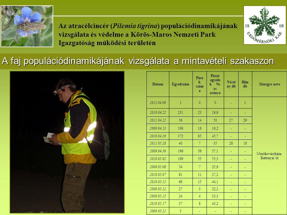 _______________________________________ Az atracélcincér (Pilemia tigrina) populációdinamikájának vizsgálata és védelme a Körös-Maros Nemzeti Park Igazgatóság működési területén A faj populációdinamikájának vizsgálata a mintavételi szakaszon DátumEgyedszám Páro k szám a Párzó egyede k %- os aránya Nősté ny db Hím db Mezsgye neve 2011.04.09100-1 Mezőkovácsháza- Battonyai út 2010.04.222312319,9-- 2011.04.225614502729 2009.04.231981616,2-- 2010.04.263728545,7-- 2011.05.28407352818 2009.04.301965657,1-- 2010.05.021995555,3-- 2009.05.0654725,9-- 2010.05.07811127,2-- 2010.05.11681544,1-- 2009.05.1227322,2-- 2009.05.1524433,3-- 2010.05.1737843,2-- 2009.05.213----
