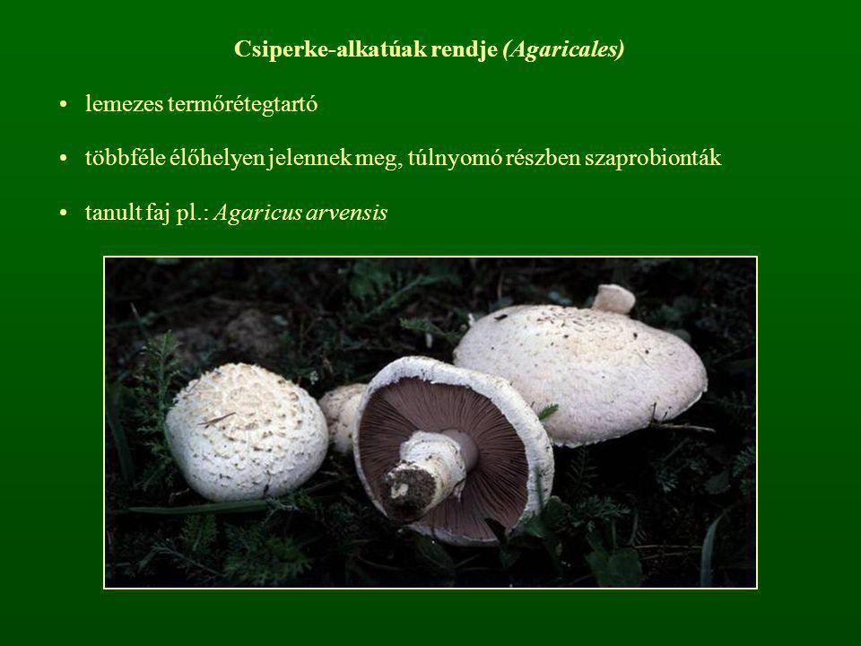 Csiperke-alkatúak rendje (Agaricales) lemezes termőrétegtartó többféle élőhelyen jelennek meg, túlnyomó részben szaprobionták tanult faj pl.: Agaricus