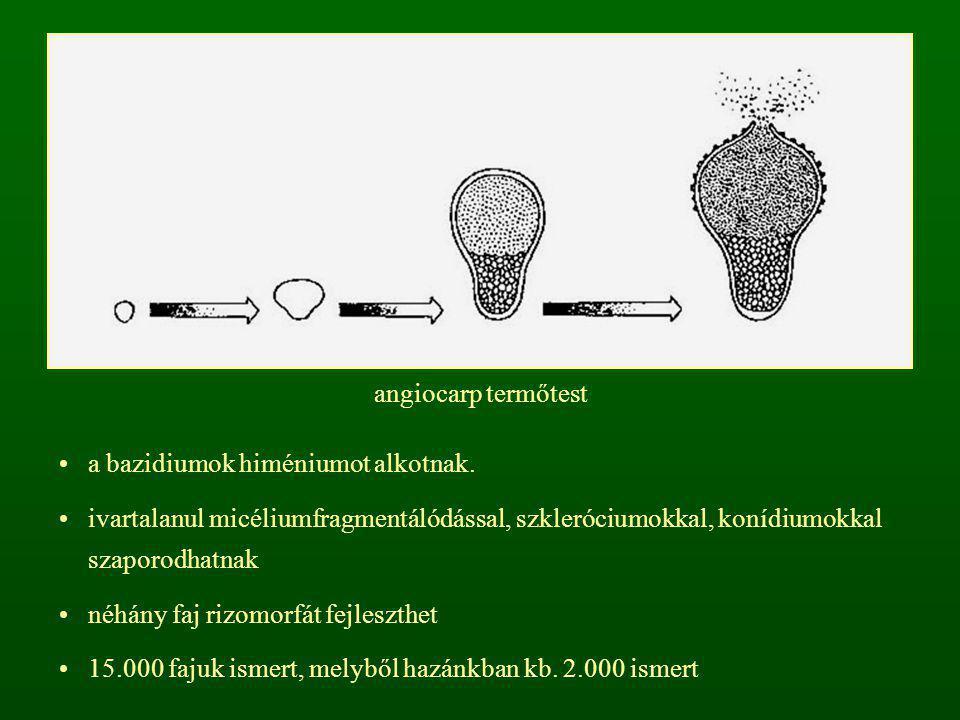 a bazidiumok himéniumot alkotnak. ivartalanul micéliumfragmentálódással, szkleróciumokkal, konídiumokkal szaporodhatnak néhány faj rizomorfát fejleszt