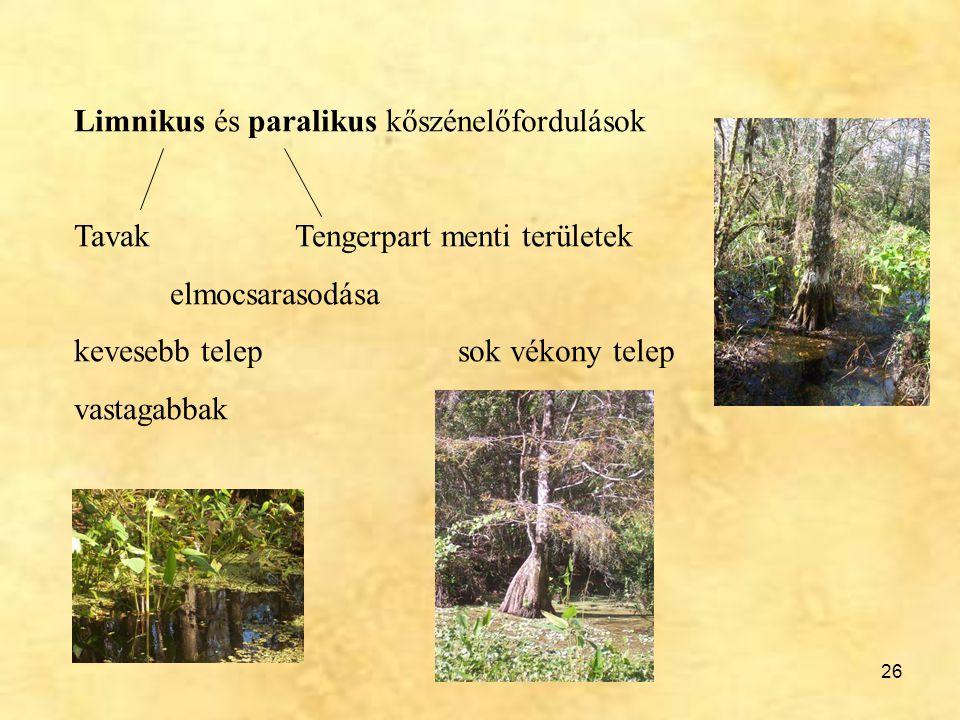 26 Limnikus és paralikus kőszénelőfordulások Tavak Tengerpart menti területek elmocsarasodása kevesebb telepsok vékony telep vastagabbak