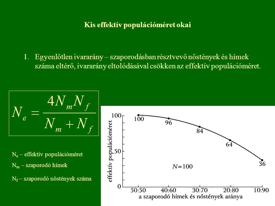 Kis effektív populációméret okai 1. Egyenlőtlen ivararány – szaporodásban résztvevő nőstények és hímek száma eltérő, ivararány eltolódásával csökken a