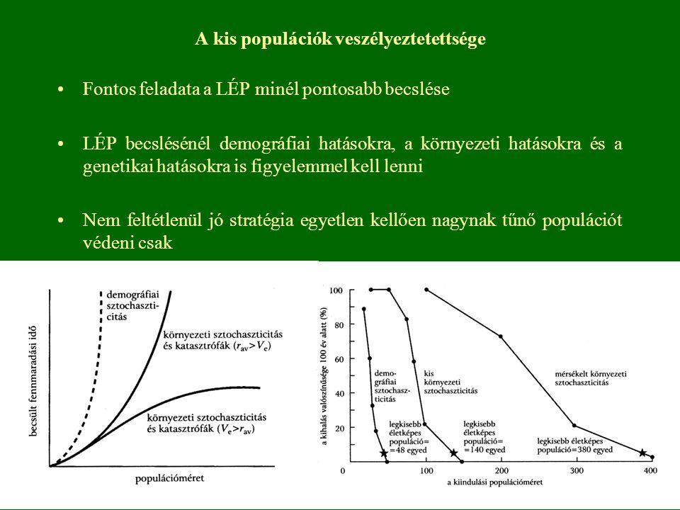 A kis populációk veszélyeztetettsége Fontos feladata a LÉP minél pontosabb becslése LÉP becslésénél demográfiai hatásokra, a környezeti hatásokra és a