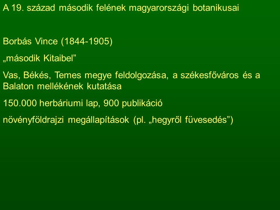 """A 19. század második felének magyarországi botanikusai Borbás Vince (1844-1905) """"második Kitaibel"""" Vas, Békés, Temes megye feldolgozása, a székesfővár"""