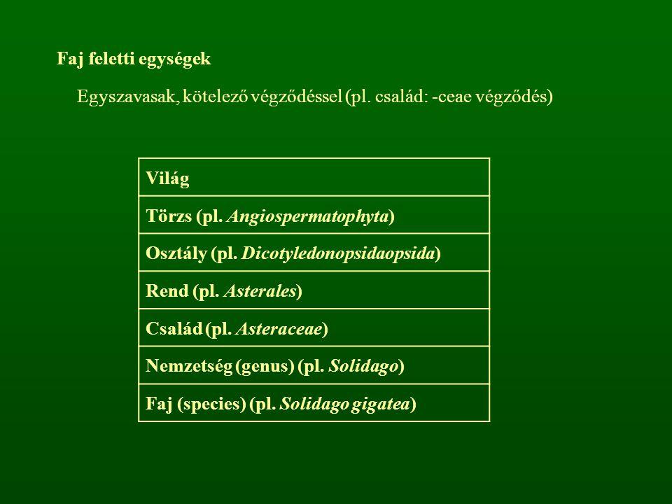 Faj feletti egységek Egyszavasak, kötelező végződéssel (pl. család: -ceae végződés) Világ Törzs (pl. Angiospermatophyta) Osztály (pl. Dicotyledonopsid