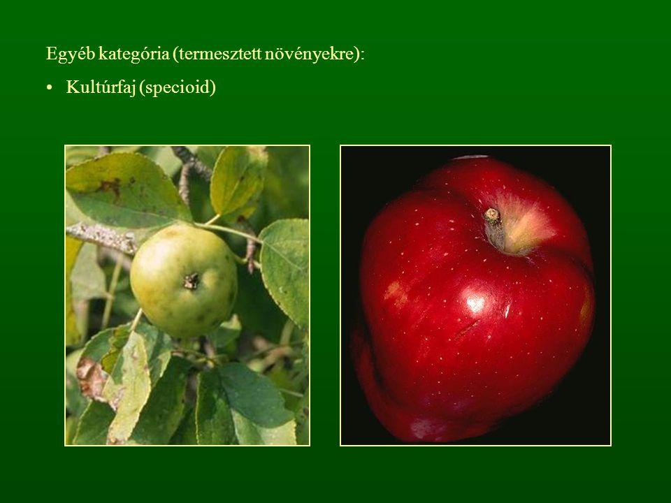 Egyéb kategória (termesztett növényekre): Kultúrfaj (specioid)