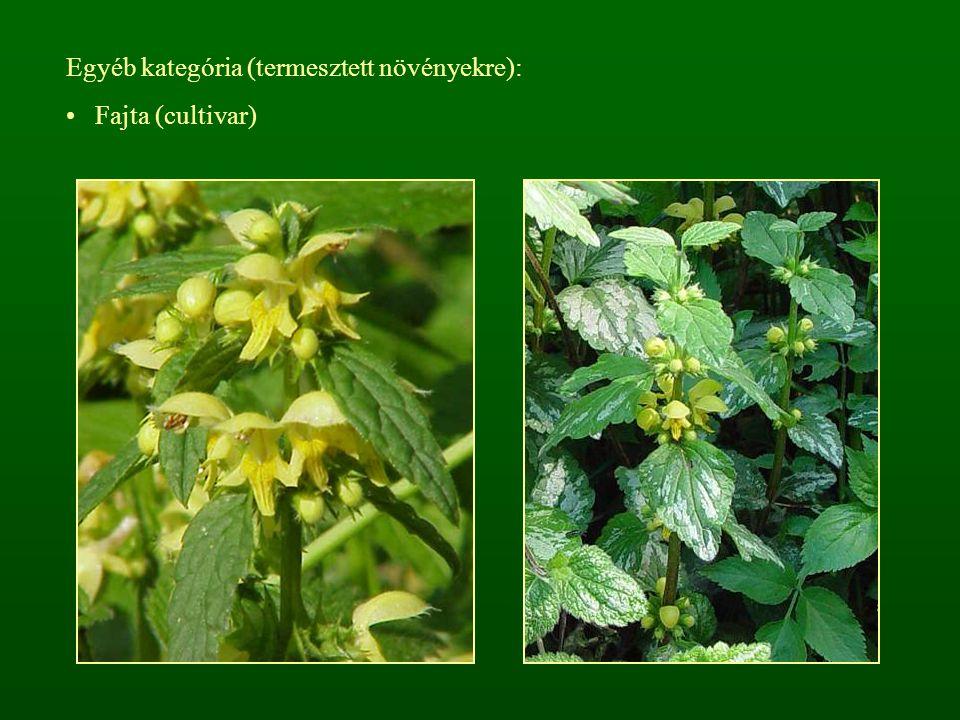 Egyéb kategória (termesztett növényekre): Fajta (cultivar)