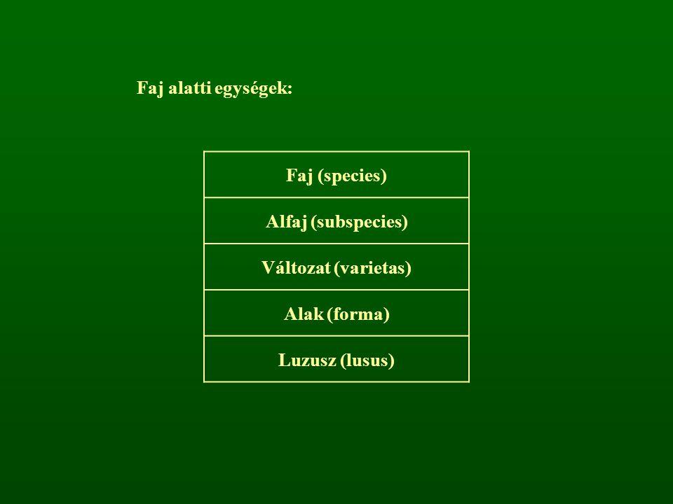 Faj alatti egységek: Faj (species) Alfaj (subspecies) Változat (varietas) Alak (forma) Luzusz (lusus)