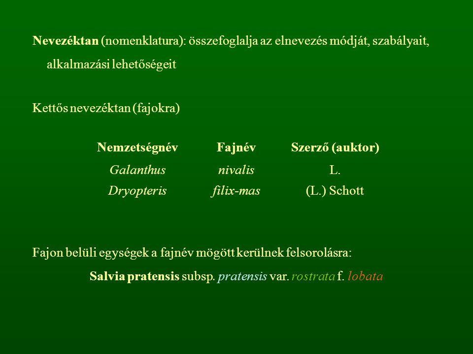 Nevezéktan (nomenklatura): összefoglalja az elnevezés módját, szabályait, alkalmazási lehetőségeit Kettős nevezéktan (fajokra) NemzetségnévFajnévSzerző (auktor) Galanthus Dryopteris nivalis filix-mas L.