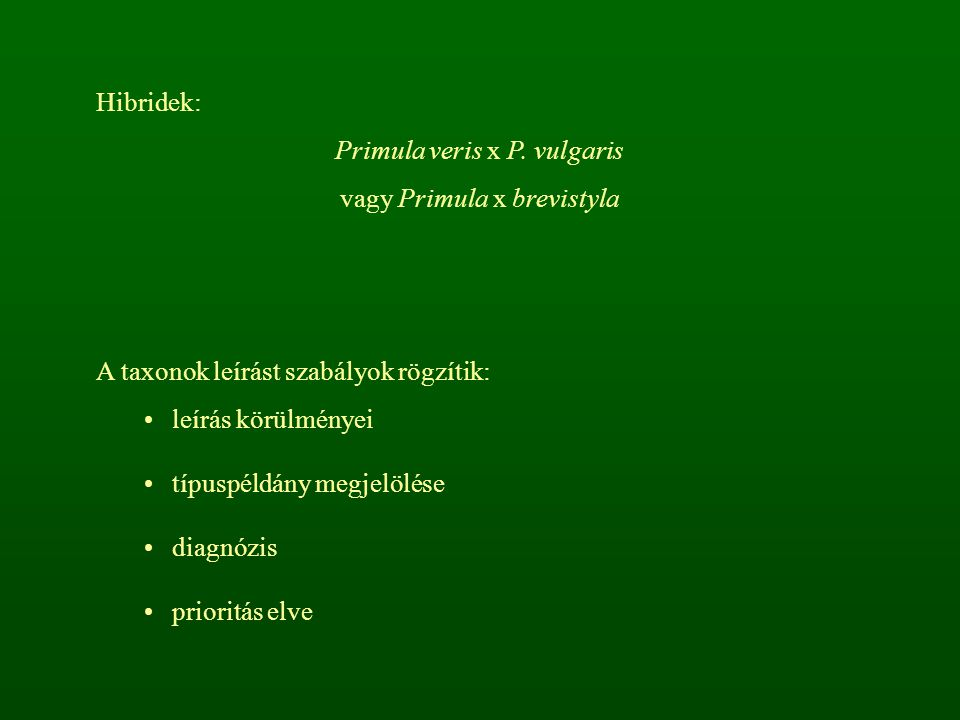 Hibridek: Primula veris x P.